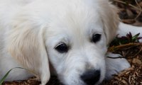 Soothing sounds to help pup calm down