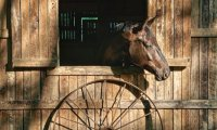 Sounds from a country stable