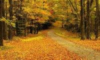A Relaxing Autumn Walk