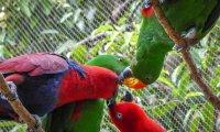 Relaxing Tropical Birdhouse