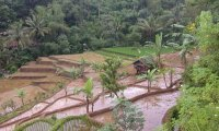 Indonesian Night's Ricefield