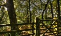 Forest birds oak.