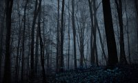 A Night in Fae-Haunted Woods