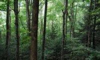 Sherwood forest sound