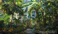 The New York Institute's Greenhouse