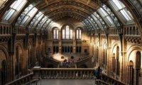 Halls of Hogwarts