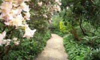 Calming Spring Garden
