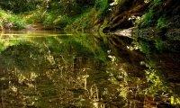 Summer by creek