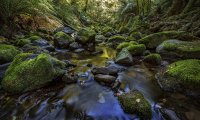 Stream flowing through a forest with frogs and birds