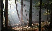 Sounds heard when taking a walk through the woods