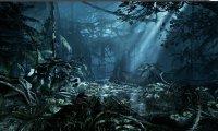 A dark jungle