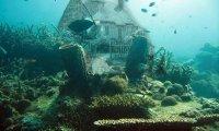 It's always summer under the sea