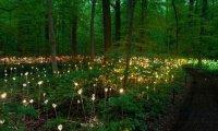 Neverland Forrest