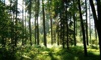 Forest Walk - Daylight