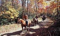 Riding on Horses