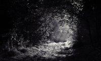 Shadows and Moonlight