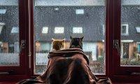 Raining day at Home