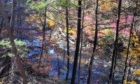 sounds of wissahickon creek