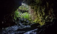 You're taking shelter in a cave from the rain... but it's not just you.