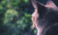 Rain day with your cat