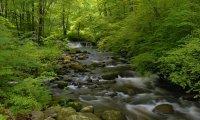 summer creek in the woods