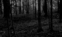 A midnight walk through a dark forest