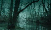 Lively Swamp