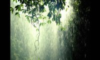 Light Rain at Night