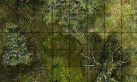 Swamp Atmospherics