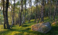 Breezy Forest for Relaxation