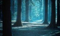 orbidden forest quest