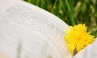 Reading in Spring
