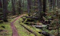 Midgard Forest