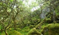 celtic forest