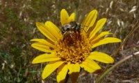 Pollinator Haven