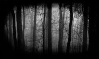 Haunted Forest at Night