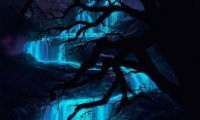 Land of Bioluminescence and Night