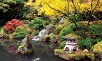 Rainy day in a Japanese garden