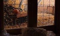 Gloomy Autumn Day
