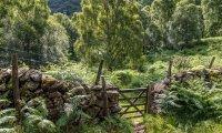 Meadowfen - Humblewood