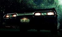 Impala at Night