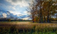 Afternoon in a Michigan field