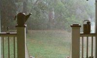 rainy afternoon catnap