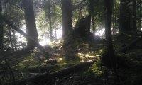 Wyckham Forest