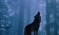 The forest of werewolves