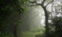 rainy bird forest