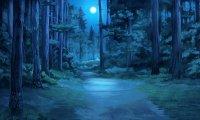 Summer Forest Night