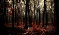 Fantasy about some dark forest