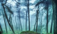 A magical forest with foreboding creatures lurking in the shadows