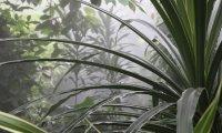 Jungle Island Ambiance